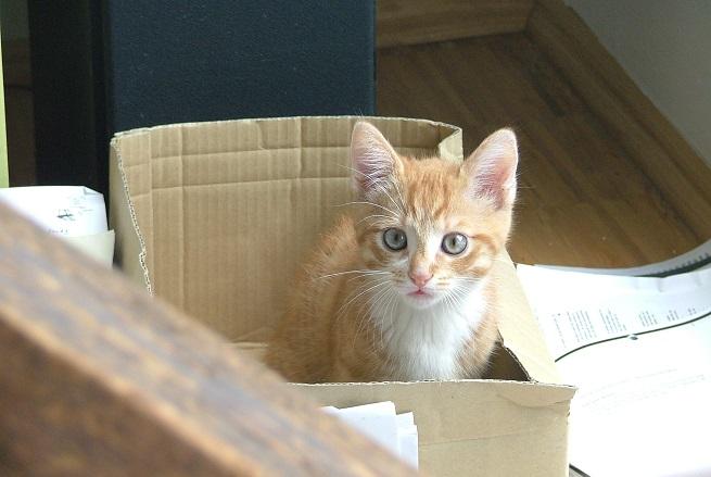 BARF für Katzenwelpen