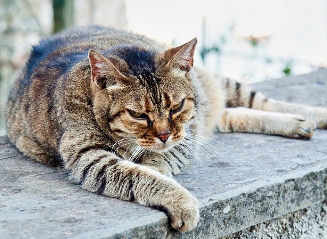 Alte Katze Unsauber Einschläfern