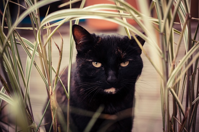 barf f r erwachsene katzen katzen richtig barfen. Black Bedroom Furniture Sets. Home Design Ideas