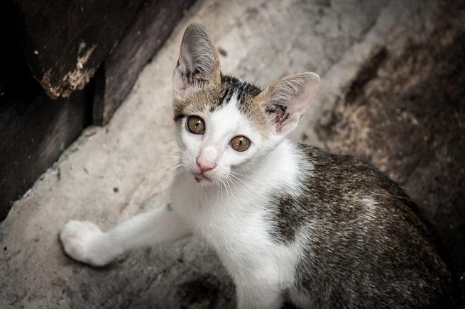BARF für untergewichtige Katzen