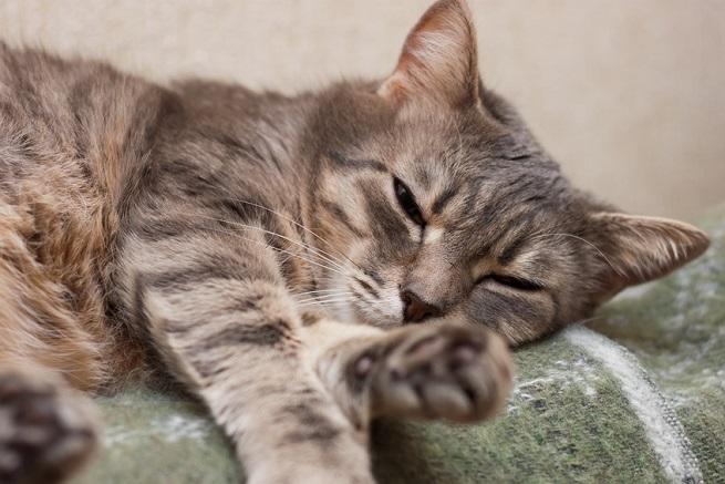 BARF bei kranken Katzen