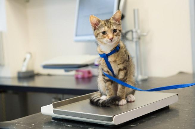 Ermittlung des Tagesbedarfs der Katze