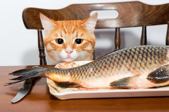 Rohfleisch vom Fisch