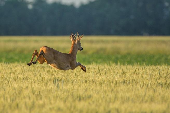 Rohfleisch von Wild und Exoten