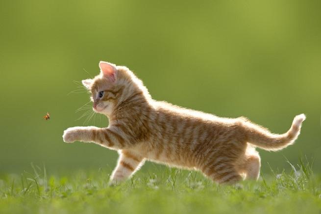 Katzen richtig Barfen